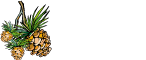 Carolina Home Mortgage Logo
